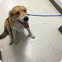 Adopt A Pet :: Mikey/Bisbee - White Settlement, TX