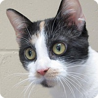 Adopt A Pet :: Myca - Jefferson, WI
