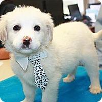 Adopt A Pet :: Sully - Sparta, NJ