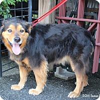 Adopt A Pet :: Baron - Bedford, VA