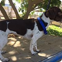 Adopt A Pet :: ZAKARI - Elk Grove, CA