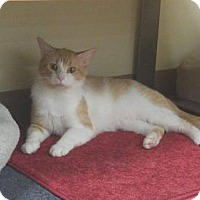 Adopt A Pet :: Mango - Balto, MD