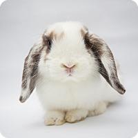 Adopt A Pet :: Tapioca - Los Angeles, CA