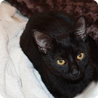 Adopt A Pet :: Gizmo - Parkton, NC
