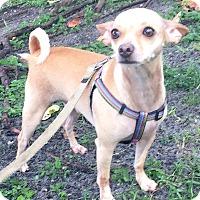 Adopt A Pet :: Weegee - Boca Raton, FL