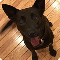 Adopt A Pet :: Sofie - Seattle, WA