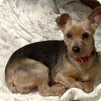 Adopt A Pet :: Evie - Buffalo, NY