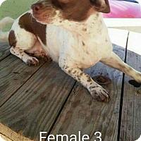 Adopt A Pet :: Moesha - Odessa, TX