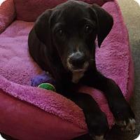 Adopt A Pet :: Gunner - Huntsville, TN