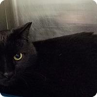 Adopt A Pet :: Apollo - Elyria, OH