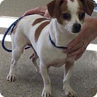 Adopt A Pet :: Turtle - Bridgeton, MO