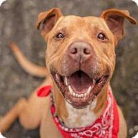 Adopt A Pet :: BUBBA - McKinleyville, CA