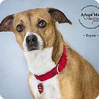 Adopt A Pet :: Rayna - Phoenix, AZ
