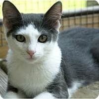 Adopt A Pet :: Garry - Monroe, GA