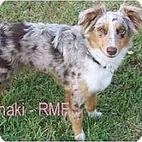 Adopt A Pet :: Khaki - Orlando, FL