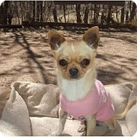 Adopt A Pet :: Thumbelina - Chimayo, NM
