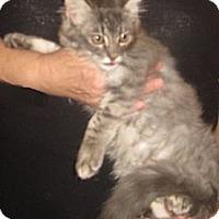 Adopt A Pet :: Mithril - Dallas, TX