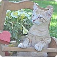 Adopt A Pet :: Tangerine - Colmar, PA