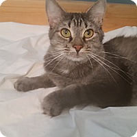 Adopt A Pet :: Abby - Cleveland, OH