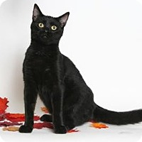Adopt A Pet :: Kristoff (Fun & Cuddly) - Arlington, VA