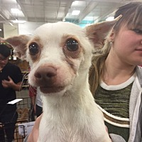 Terrier (Unknown Type, Medium) Mix Dog for adoption in Fresno, California - Depot