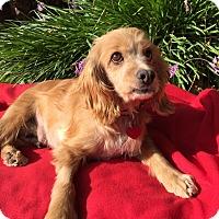 Adopt A Pet :: Lila - Santa Barbara, CA