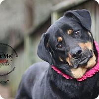 Adopt A Pet :: Abilene - White Hall, AR