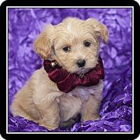 Adopt A Pet :: Allie - San Diego, CA
