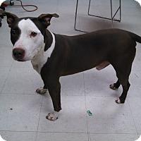 Adopt A Pet :: Benny - Willington, CT
