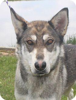 Dog Rescue Staunton Va
