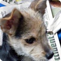 Adopt A Pet :: Tramp - Okeechobee, FL