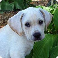 Adopt A Pet :: Fuji - Yardley, PA