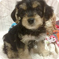Adopt A Pet :: Winchester (ARSG) - Santa Ana, CA