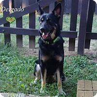 Adopt A Pet :: Delgado - Clemmons, NC