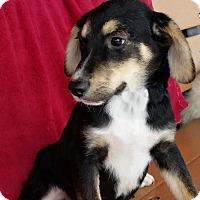 Adopt A Pet :: August - Urbana, OH