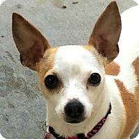 Adopt A Pet :: Chips - Pontiac, MI