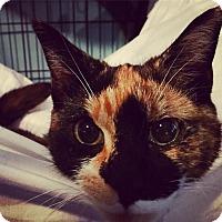 Adopt A Pet :: Muriel - Brooklyn, NY