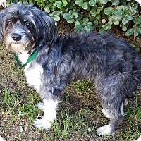 Adopt A Pet :: Polly - Los Angeles, CA