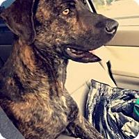 Adopt A Pet :: Leroy - Ellaville, GA