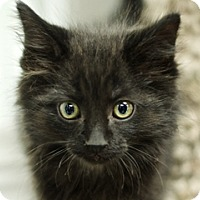 Adopt A Pet :: Aggie - Great Falls, MT