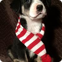 Adopt A Pet :: Drew - SOUTHINGTON, CT