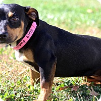 Adopt A Pet :: Aurora - Waldorf, MD