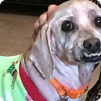 Adopt A Pet :: Morrisy - Alpharetta, GA
