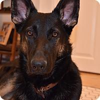 Adopt A Pet :: Shiloh - Ogden, UT