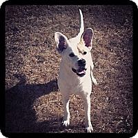 Adopt A Pet :: Jess - Knoxville, TN