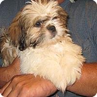 Adopt A Pet :: Rocky - Salem, NH