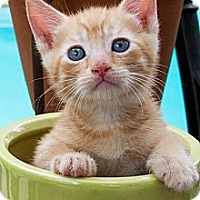 Adopt A Pet :: Don - Irvine, CA