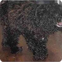 Adopt A Pet :: Penny Lane - Seymour, CT