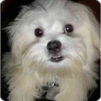 Adopt A Pet :: Earl - Mooy, AL