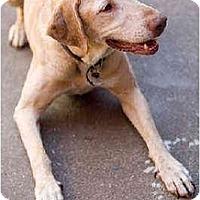 Adopt A Pet :: Drew - Portland, OR